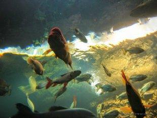 Wielkie Akwarium