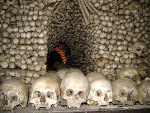Od 40 do 60 tys. szkieletów