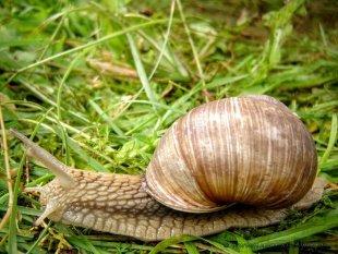 Ślimak, ślimak, pokaż rogi...