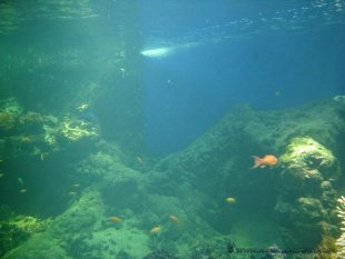 Pod taflą wody
