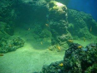 Kolorowe ryby