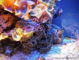 W Wielkim Akwarium można podziwiać ciekawe okazy